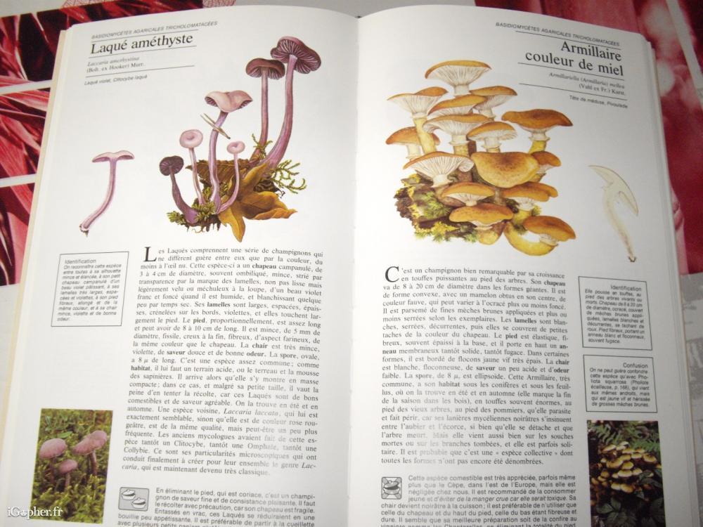 livre guide des champignons. Black Bedroom Furniture Sets. Home Design Ideas