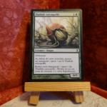 Carte Magic the Gathering : Thallidé encoquillé